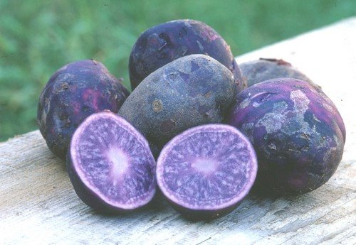 File:Purple potatoes.jpg