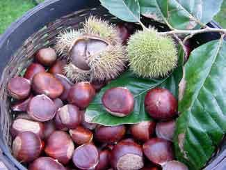 File:Chestnut.jpg