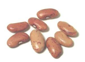 Bayo bean