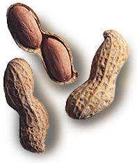 File:Groundnuts.JPG