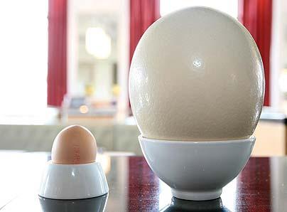 File:Ostrich egg.jpg