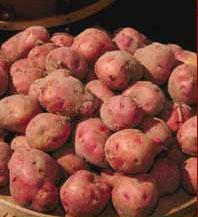 File:Potato 02.jpg