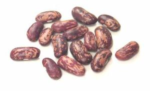 Tolosana bean