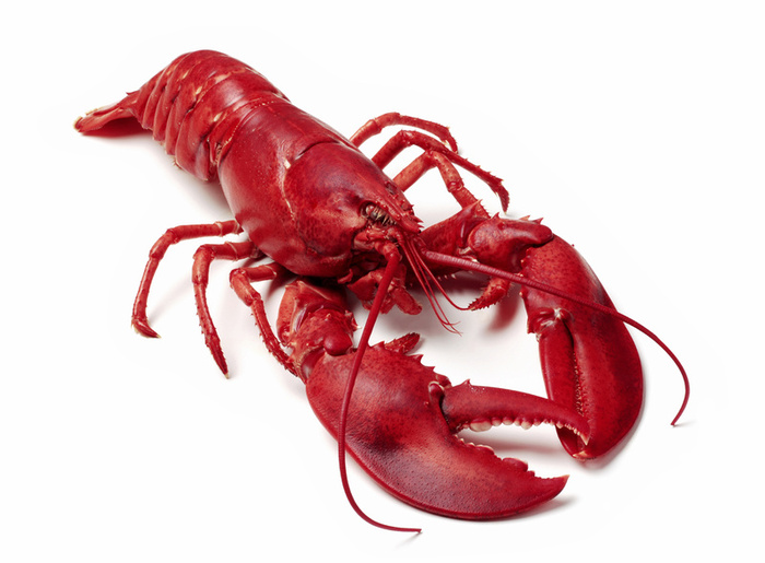 Image result for lobster meal wikipedia