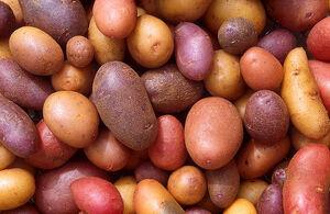 Potato varieties