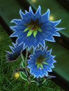 Sky Blossom Plant
