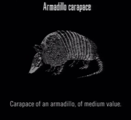 File:Animals Armadillo Carapace.jpg