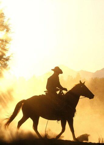 File:Equestrian wallpapers 430.jpg
