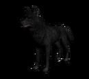 Lobo the Wolf