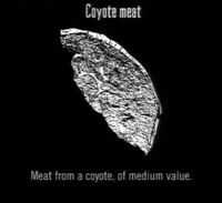 Animals Coyote Meat