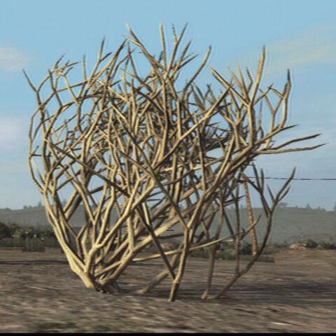 File:Tumbleweed-plant.jpg