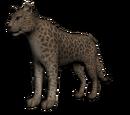 Khan the Jaguar