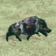Undead-Boar