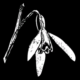 File:RDR Plant Violet Snowdrop.png