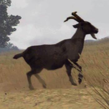 File:Horned-Goat-01.jpg