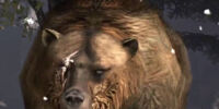 Brumas the Bear
