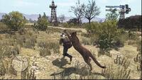 Cougar-attack-at-Plainview
