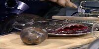 Mimian bladder fish