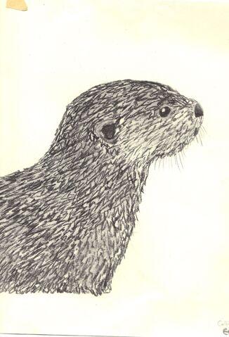 File:River otter.jpg