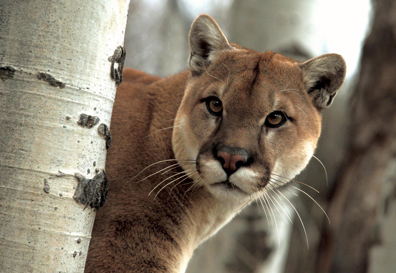 20 animales en peligro de extincion yahoo dating 3