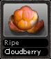 Ripe Cloudberry
