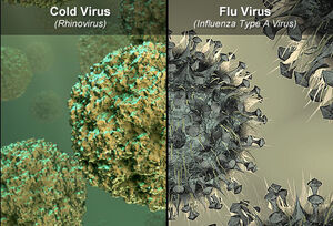 Cold and flu viruses
