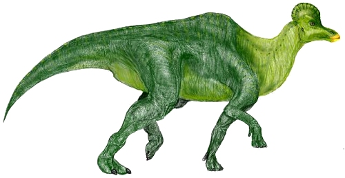 File:Corythosaurus.jpg