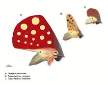 File:Tupandactylus heads.png