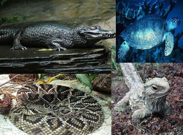 File:Reptile.jpg