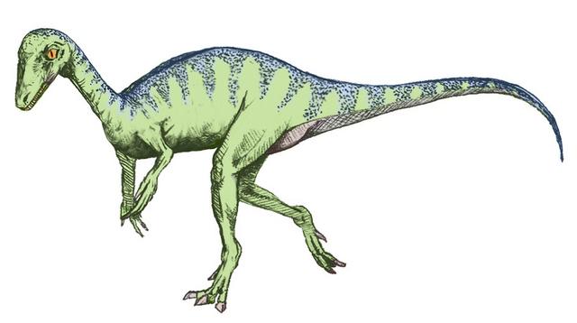 File:Eoraptor sketch.png