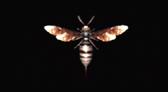 File:1 Remake Bee Specimen.jpg