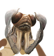 Plague crawler face