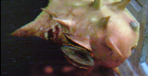 File:Infected blowfish.png