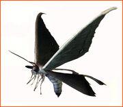 Mothcv ene