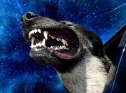 20130529-12523135-warpdogs1