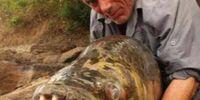 Nopefish