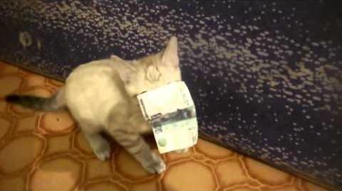 Котёнок воришка kitten thief