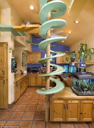 Cat-Paradise-Kitchen