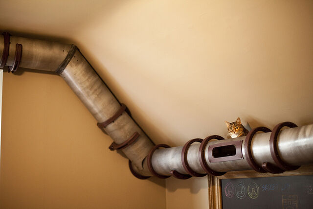 File:Cat-tube-transport 03-1-.jpg
