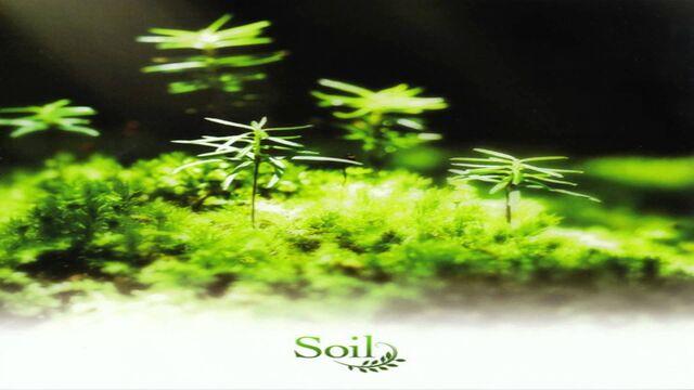 File:Soil Album.jpg