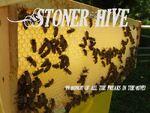 Stoner Hive