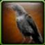 Black Crow Icon