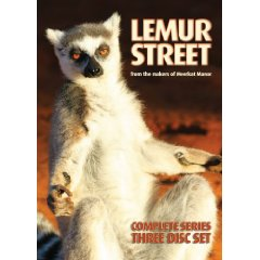 File:Lemur street.jpg