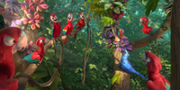 Red Macaw Tribe