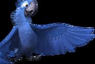 Rio2 bluuu