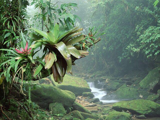 File:Atlantic Rainforest.jpg