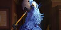 Spix's Macaw Family