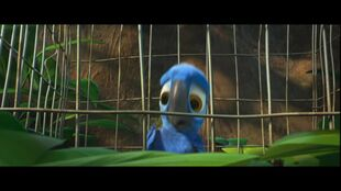 Rio blu baby trapped in cage