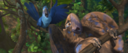Macaw or turkey