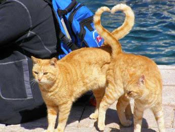 File:Kitty in love.jpg